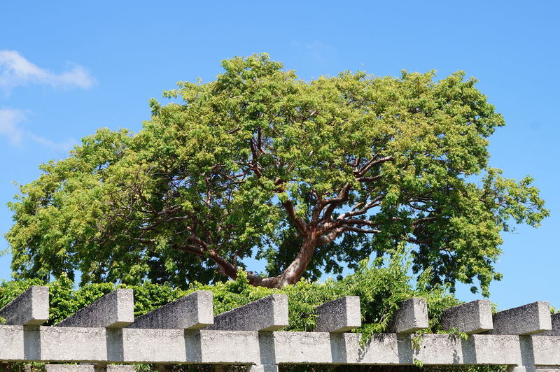 Plant Tree Sky Nature Architecture Low Angle View Built Structure No People Day Beauty In Nature Green Color Clear Sky Sunlight Concrete Outdoors Parque La Choca VillahermosaTabasco