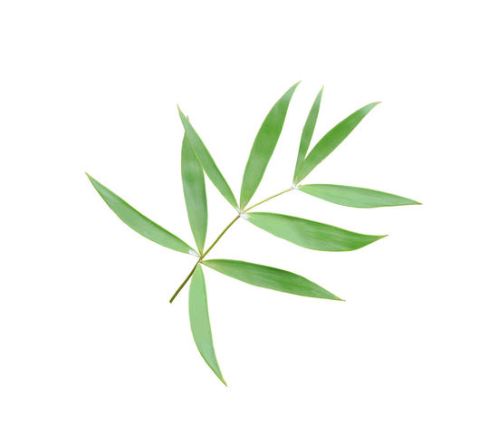 green palm leaf on white background Palm Coconut Tree Green Plant Leaf Tropical Botany White Nature Growth Frond Foliage Cactus Bamboo Rattan Cobia Fern