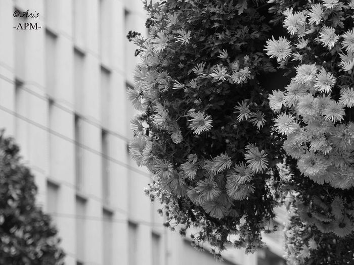 Tree Nature Flower City No People Fragility Day Architecture Beauty In Nature Growth Outdoors Plant Architecture Old Francephotographer Photography Aris Philoxene Meyborn Picture Tranquility City Limoges French Built Structure Beauty In Nature