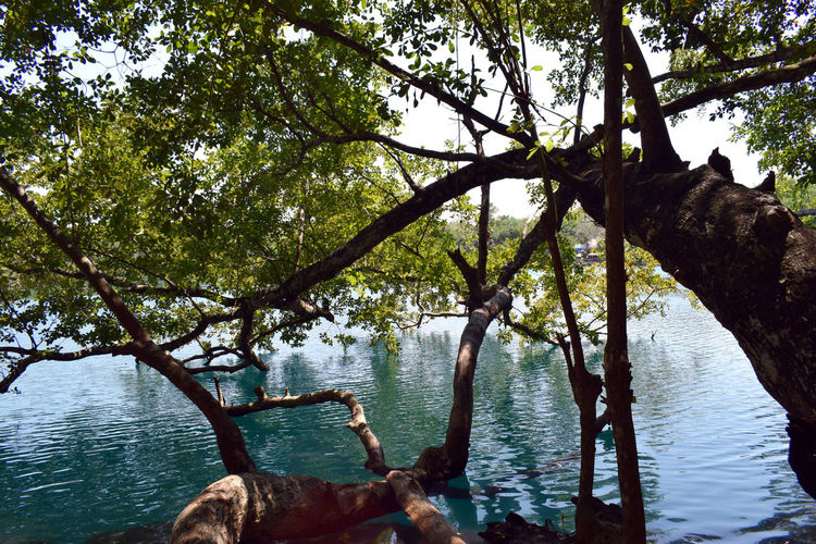 Bacalar Bacalar Lagoon Mexico Branch Lake Nature No People Outdoors Tranquility Tree Tree Trunk Water