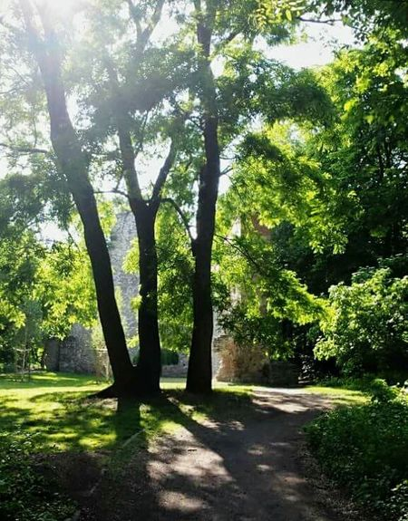 2015 May Green Color Nature Budapest, Hungary Margaret Island