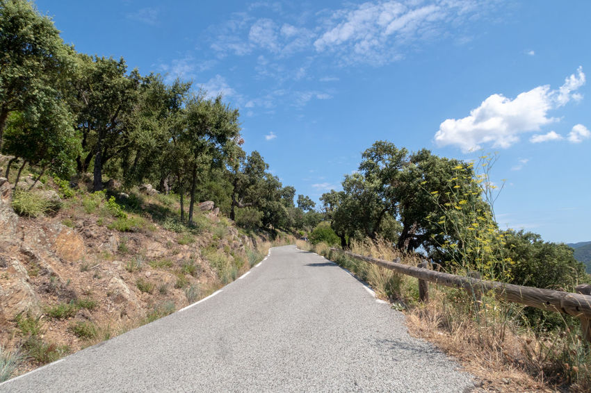 Marquis Massif Des Maures,Var Mediterranean  Cloud - Sky Day Diminishing Perspective Direction Empty Growth Landscape Mauresque Nature No People Non-urban Scene Outdoors Plant Road Scenics - Nature Sky The Way Forward Tranquil Scene Tranquility Transportation Tree Winding Road