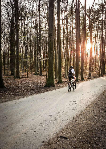 Adventure Bare Trees Bicycle Cycling Exercising Forest Freedom Leaves Leisure Activity Motion Mountain Bike Nature One Man Only One Person Outdoors Riding Shadow And Light Sonian Forest Speed Strength Sunny Day Trunks Winter Wintertime