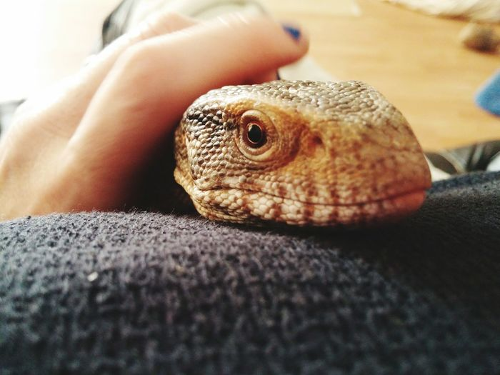 Cropped image of person holding lizard