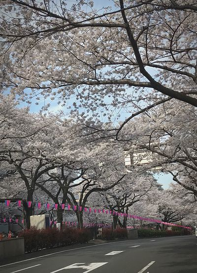 Flower Japan