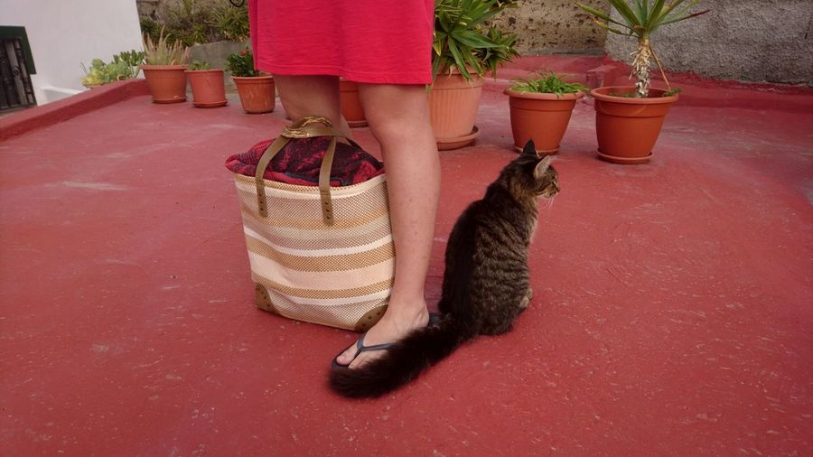 Woman with cat. Tenerife Armeñime SPAIN España Canary Islands Islas Canarias Red Cat Cats Leg Woman With Cat Basket Summer Still Life Cats Red Basket Close-up