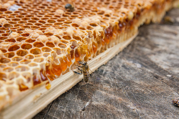Animal Animal Themes Animal Wildlife APIculture Bee Beehive Bread Close-up Day Food Food And Drink Freshness High Angle View Honey Bee Honeycomb Nature No People Selective Focus Still Life Wood - Material