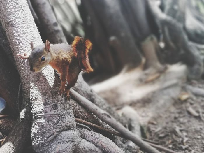Squirrel Portrait Close-up Paw Squirrel Animal Nose Animal Limb Rodent Young Animal