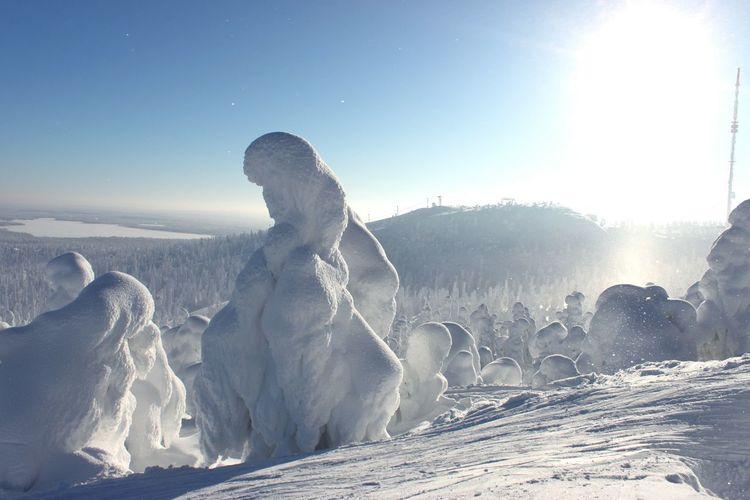 Snow covered trees at rukatunturi