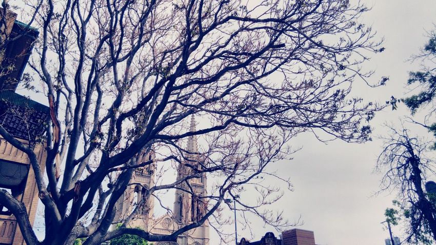 Tree Branches Cathedrals  Tree And Sky Beautiful Spring Tree Church