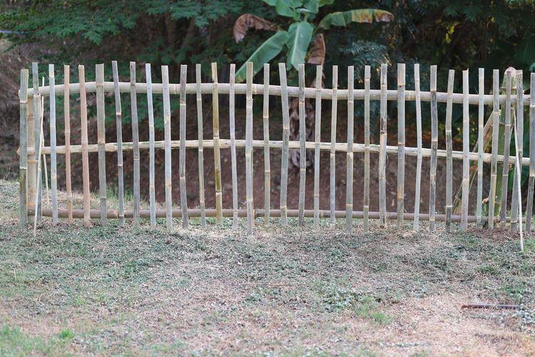 Plants growing on field in yard
