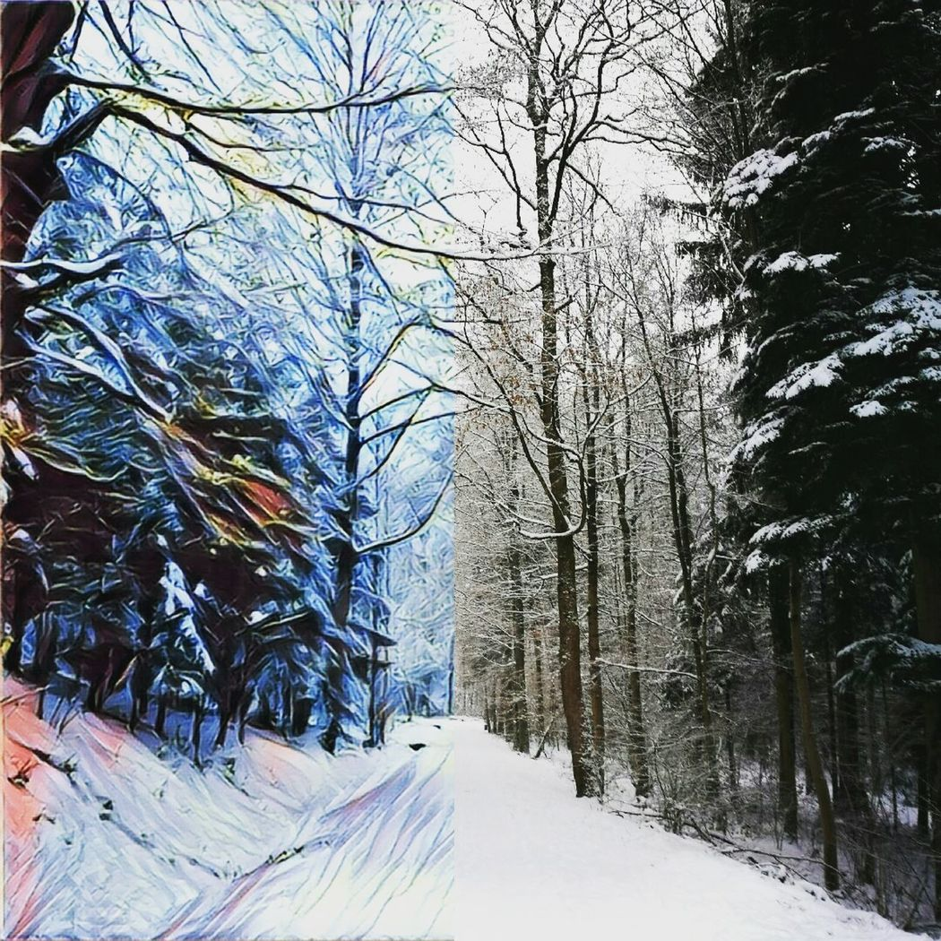 Tree Winter Snow Nature Beauty In Nature Forest Tranquil Scene