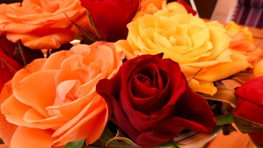 Close up of yellow, orange and red Rose blossoms Flower Flowering Plant Beauty In Nature Rosé Rose - Flower Petal Plant Close-up Inflorescence Flower Head Fragility Freshness Vulnerability  Red Nature No People Orange Color Indoors  Flower Arrangement Bouquet