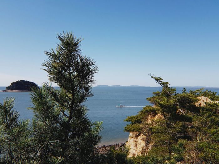 a view from Muuido, an island in South Korea. Horizon Over Water Pine Tree Horizon Boat Sailing Rock Love To Take Photos ❤ Nature Nature_collection Nature Photography Naturelovers Photography No People Seascape Tree Water Sea Clear Sky Blue Sky Landscape Plant