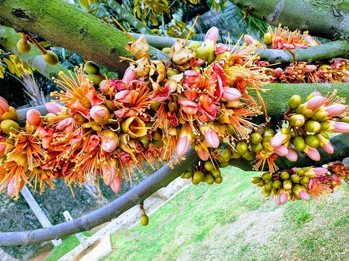 Durian Flowers
