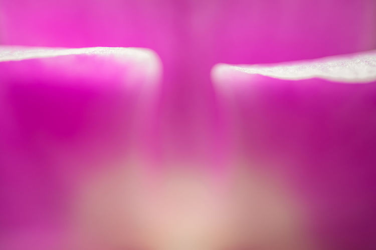 Pink Color Purple Abstract Backgrounds No People Pastel Colored Pink Background Abstract Backgrounds Beauty In Nature Magenta Colored Background Beauty Defocused Copy Space Bright Softness Flower Floral Abstract Lines White Orchid Copy Space Copyspace Dreamy Soft