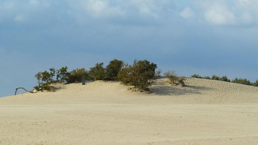 Tree Sand Dune Sand Desert Sky Landscape