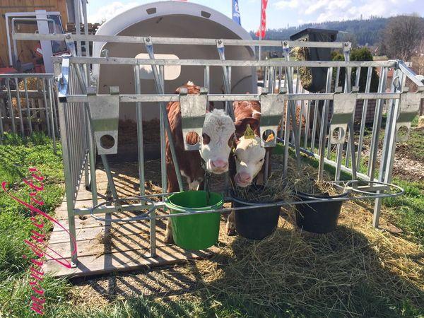 Kuhkinders Kinderstube. 💕💓 Monique52 Kühe Kuhkind Schön Süss Putzig