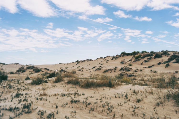 Dunes full of low shrubs by the sea in the delta del ebro, spain