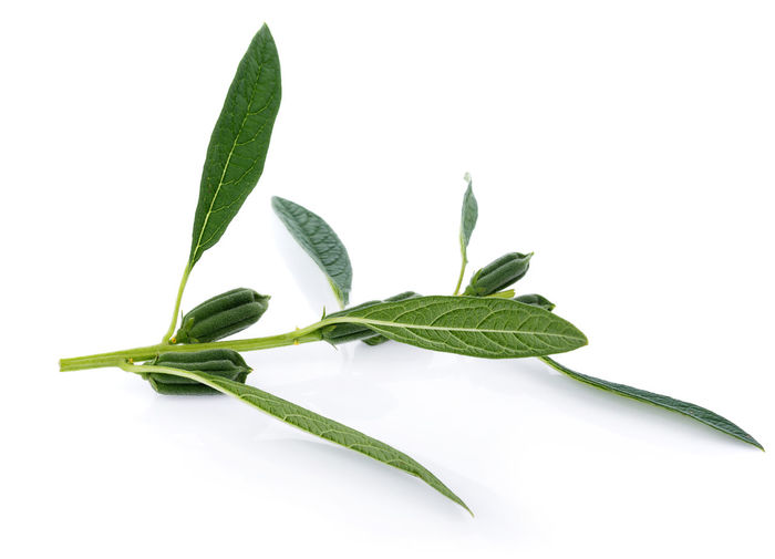 Close-Up Of Green Leaves Against White Background