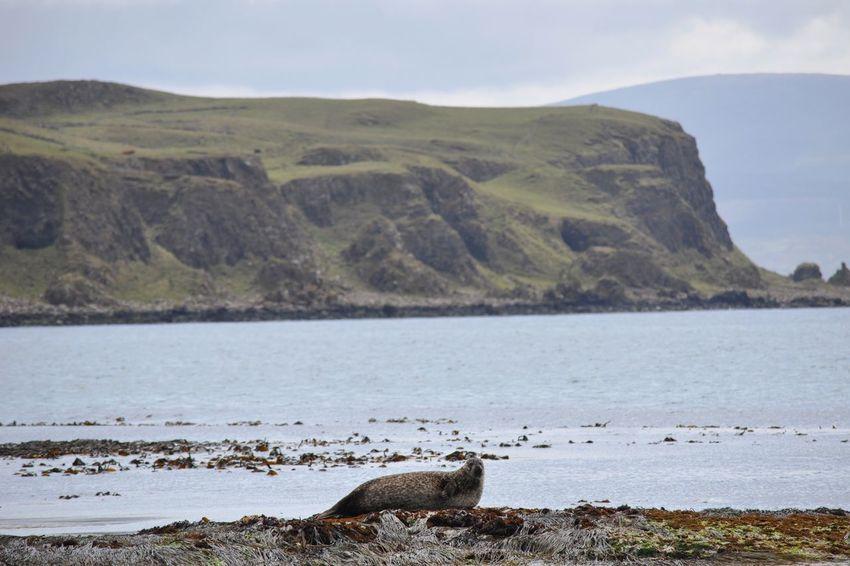 Seal on Rathlin Island Northern Ireland Rathlin Island Seal