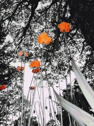 Low angle view of red flower tree against sky