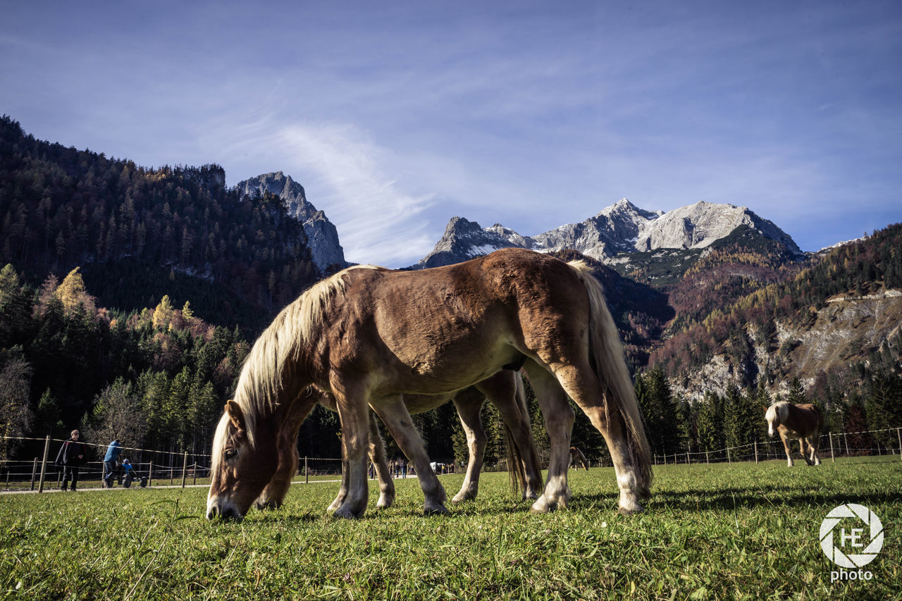 horse, domestic animals, grass, animal themes, livestock, grazing, field, mammal, mountain, sky, outdoors, standing, day, nature, no people, tree, landscape, full length