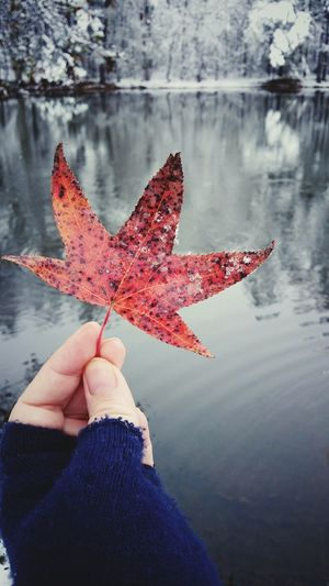 Winter Gloved Hand Seasons Reflections Shades Of Winter Autumn One Person Human Body Part Human Hand Holding People Outdoors Day Maple Leaf Water Leaf