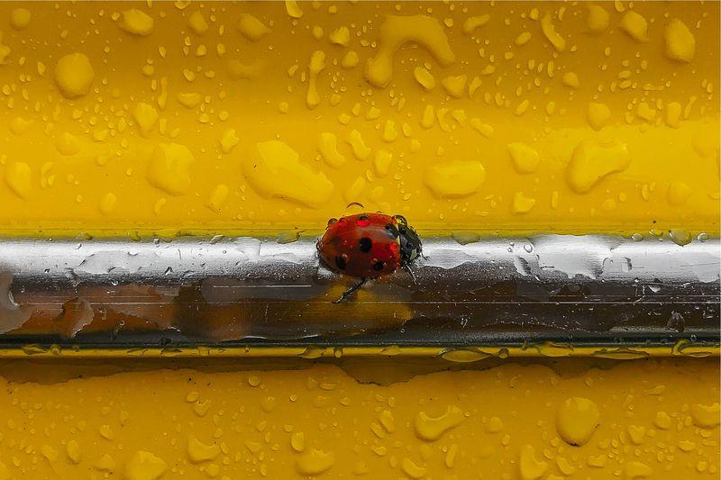 Beetle on