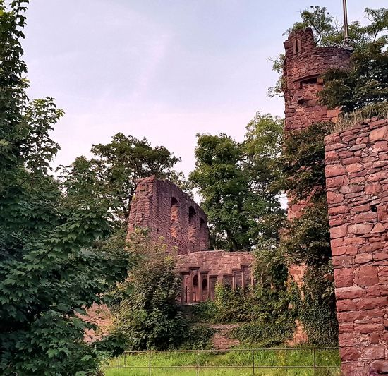 Tree No People Outdoors Built Structure Day Growth Architecture Low Angle View Nature Sky Building Exterior Water Pixelated Outdoors❤ Lovelife Homeiswheretheheartis Klingenberg Am Main Castle Castle Ruin