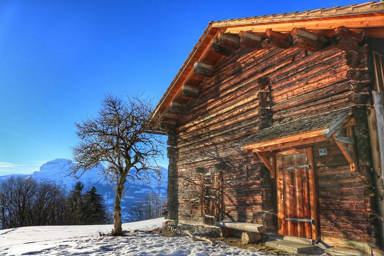 Snow Winter Cold Temperature Weather Tree Wood - Material Blue Clear Sky Nature Architecture No People House Building Exterior Bare Tree Beauty In Nature Outdoors Day Sky