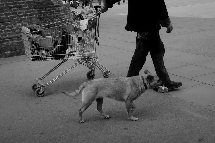 Serenity Blackandwhitephotography Photography Strangers Art Grunge Blackandwhite RAWphotography Eye4photography  Raw EyeEm Selects EyeEm Best Shots EyeEm Best Shots - Black + White City Life Urban Pets Of Eyeem Mansbestfriend Trust Companion Barcelona Pets Dog Low Section