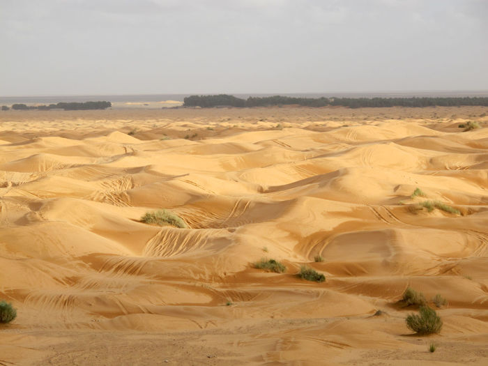 Tunisia travel holidays Scenics - Nature Land Landscape Desert Tranquility Tranquil Scene Sky Climate Environment Beauty In Nature Arid Climate Nature Sand Non-urban Scene Sand Dune Day Remote No People Plant Horizon Outdoors