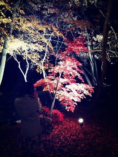 Relaxing 紅葉
