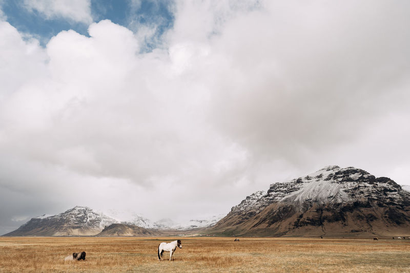 View of a horse on landscape against mountain range