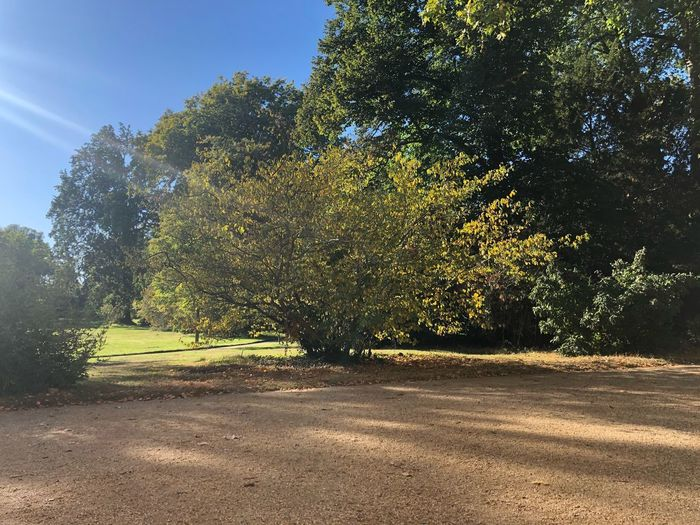 Germany IPhone X IPhone X Photography Potsdam Park Sanssouci Tree Autumn Tree Plant Sunlight Growth Nature Sky Day No People Tranquility Beauty In Nature Outdoors Land Low Angle View Shadow Tranquil Scene Road Green Color Sunny Field Transportation