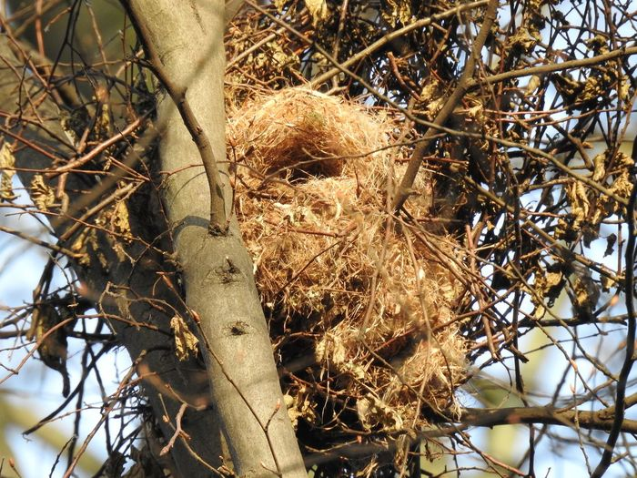 Animal Themes Animals In The Wild Bird Photography Birds Branch Close-up Day Forest Low Angle View Nature Nature Photography Nature_collection Nest Nesting Place No People Outdoors Tree