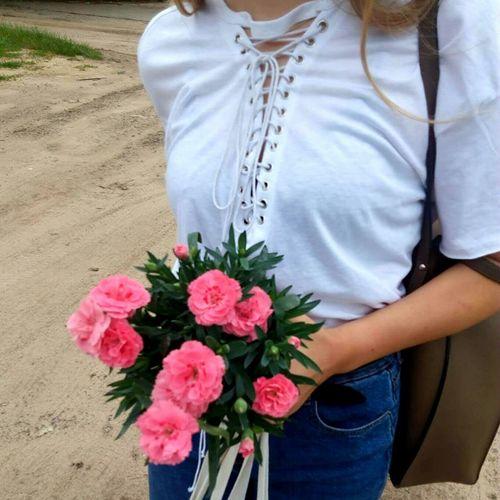 Flowers Flower Kwiaty