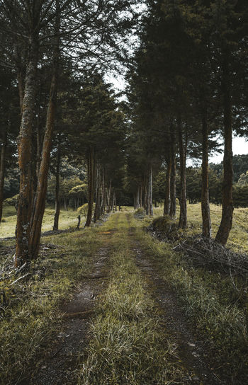 Nature Photography Beauty In Nature Day Diminishing Perspective Direction Footpath Forest Grass Land Landscape Nature Nature_collection No People Non-urban Scene Outdoors Plant Scenics - Nature The Way Forward Trail Tranquil Scene Tranquility Tree Tree Trunk Treelined WoodLand