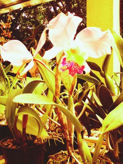 Flowers,Plants & Garden Orquideas