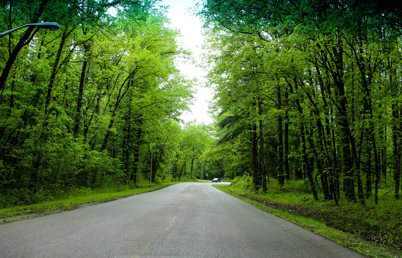 Empty Road In Forest Amidst Trees