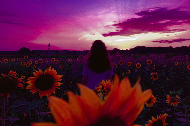 Rear view of woman and purple flowering plants on field during sunset