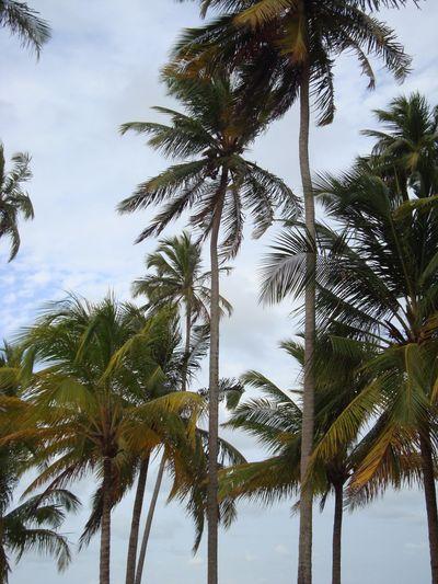 Coqueiros Beach Beauty In Nature Nature Praia