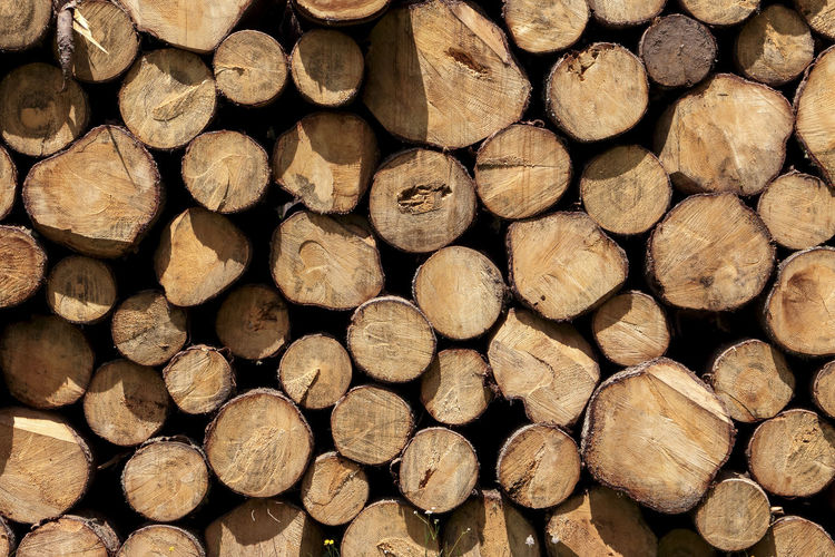 Deforestation Backgrounds Circles Deforestation Firewood Forestry Industry Full Frame Large Group Of Objects Log Textures Trunks Woodpile