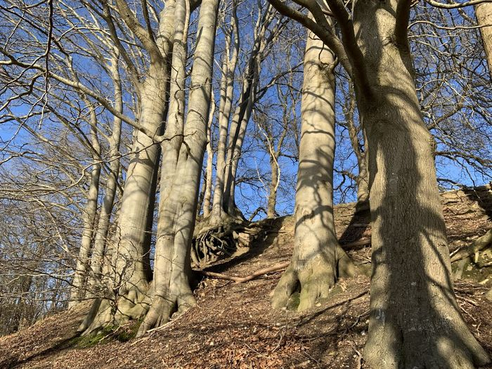 Low angle view of bare trees in forest