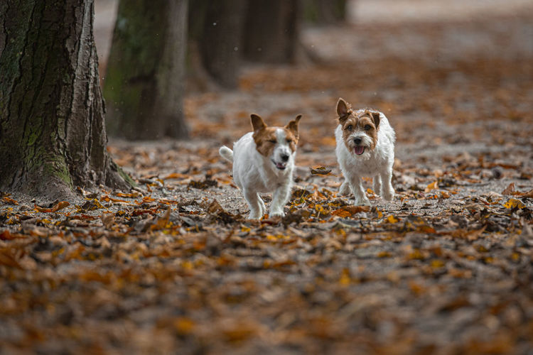Portrait of dogs running on land