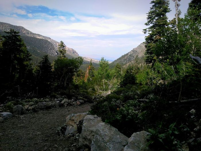 Mountain Outdoors Beauty In Nature Tree Cloud - Sky Landscape Nature Mt Charleston Nevada Mountains Nevada, United States Hiking Mt Charleston Nevada Landscape Mountain
