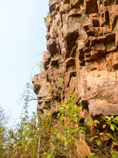 Nature Rock - Object Outdoors No People Day Tree Sky Low Angle View Ancient Civilization Growth Beauty In Nature Close-up