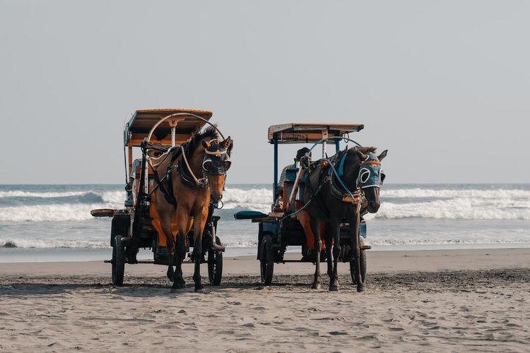Horse cart on beach against sky