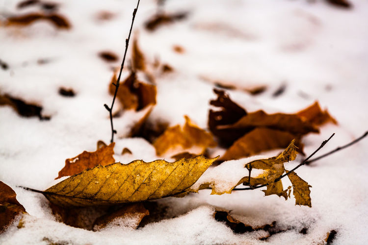 Close-Up Of Dry Leaf On Snow